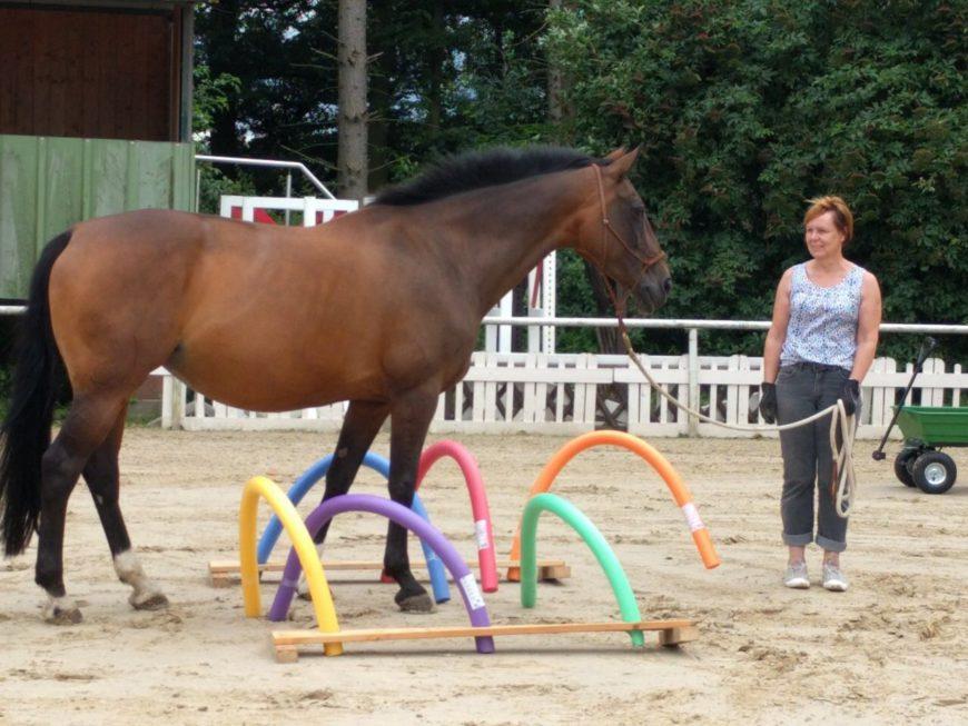 Gelassenheitstraining für Pferde